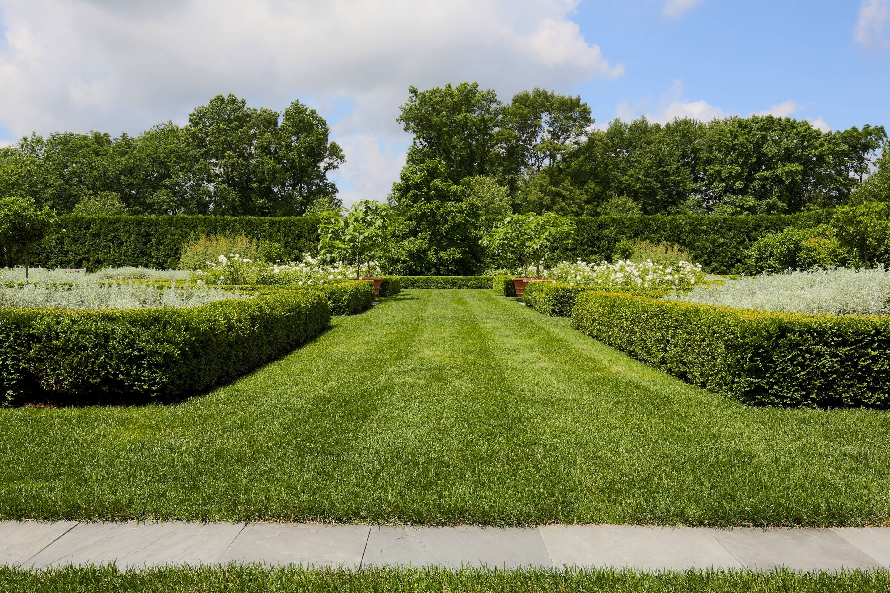 Privacy Landscaping - Boxwood