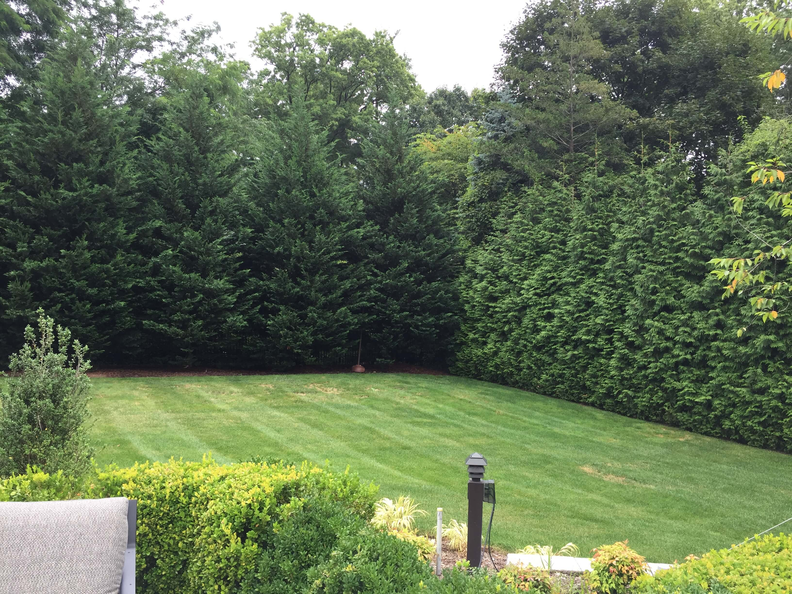 Privacy Landscaping - Arborvitae